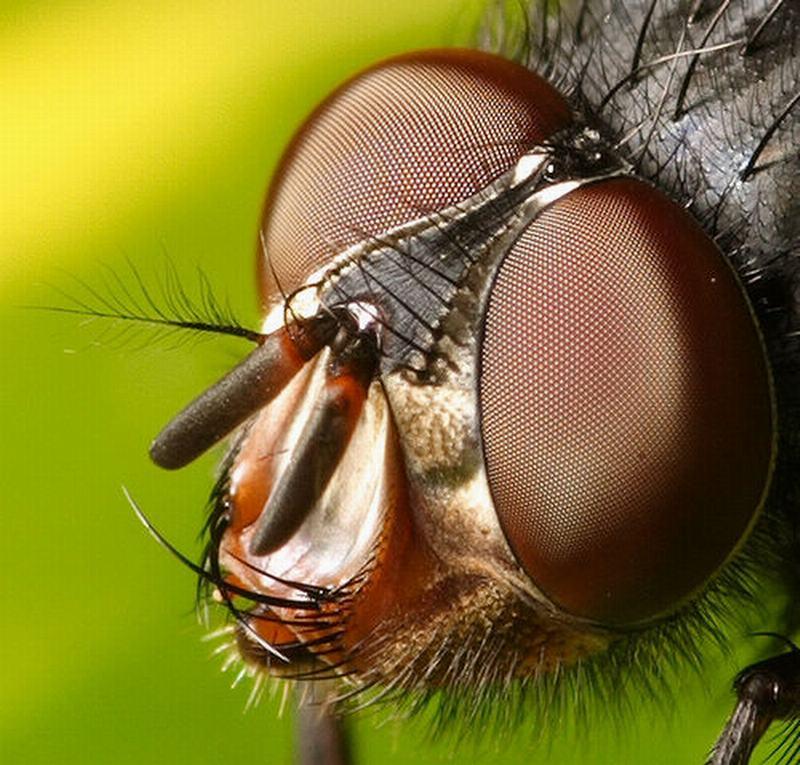 {المؤمن بحاجة إلى التفكر في مخلوقات الله تعالى،}-? Fly-creation