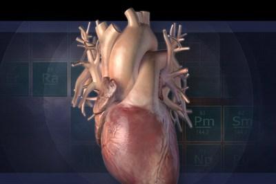 سبحان الله أحدث دراسة علمية أن القلب يقوم بتجديد خلاياه Heart-cell-1