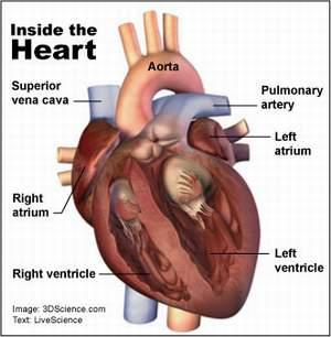 Σουρα 22 αλ Χατζζ στιχος 46 Heart-image1