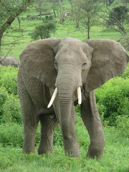 أكبر المخلوقات في عالم الحيوان Largest-animals-3