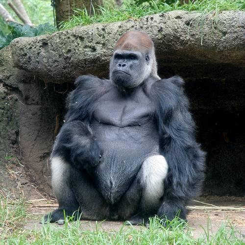أكبر المخلوقات في عالم الحيوان Largest-animals-4