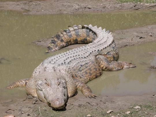 أكبر المخلوقات في عالم الحيوان Largest-animals-5
