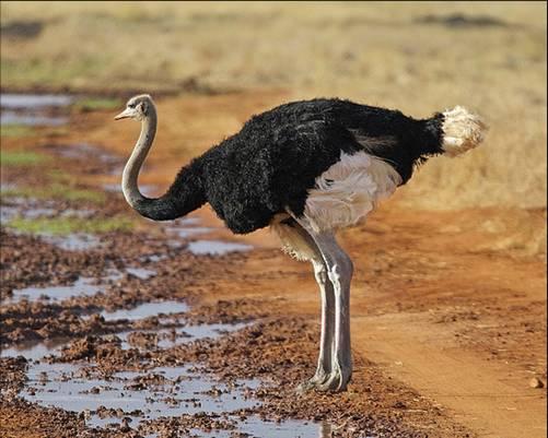أكبر المخلوقات في العالم Largest-animals-6