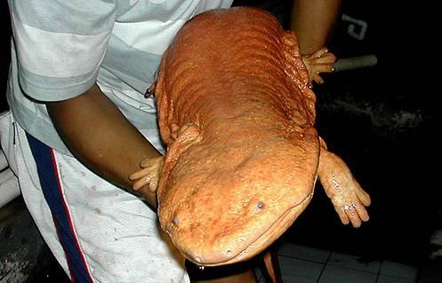 أكبر المخلوقات في العالم Largest-animals-7