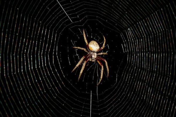 عجائب الحشرات: حقائق تدعو للإيمان Spider_web_wonder