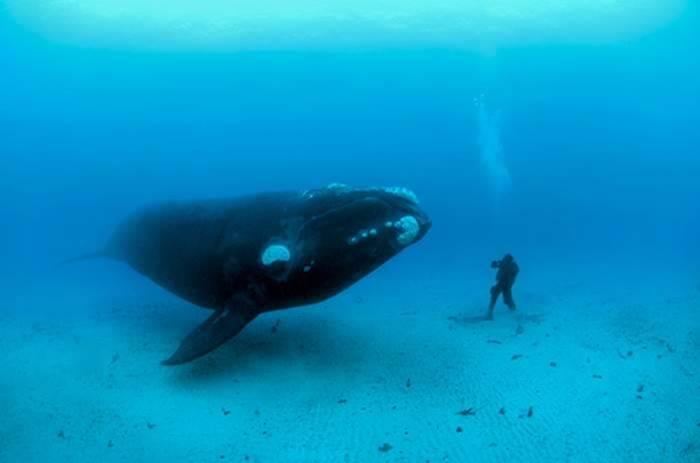 دعاء سيدنا يونس وهو في بطن الحوت Whale_miracle_yonus