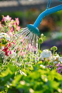 Sve o Baštama i Cveću !!! Zalivanje-cve%C4%87a
