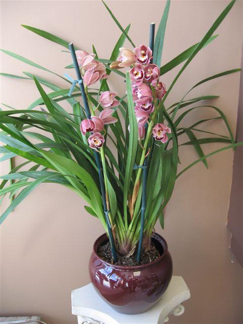 Sve o Baštama i Cveću !!! Zalivanje-orhideja
