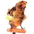 KIVIRCIK kuşu Kivircik_master