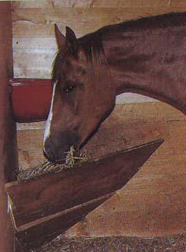 Потребность лошади в питательных и минеральных веществах Korm1