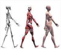 எலும்புகள் Man_bones_200