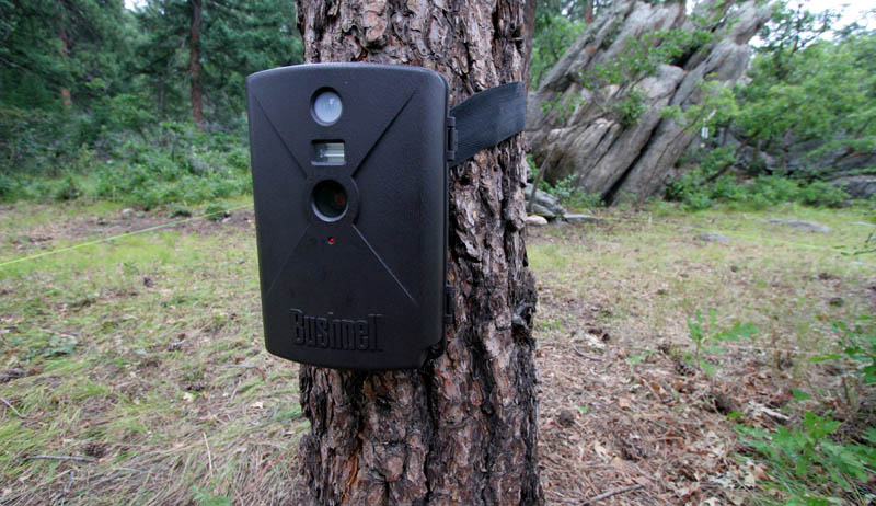 Bushnell Trail Sentry 119205C Review CameraWEB