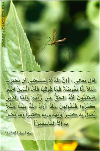 بالصور معجزة قرانية اثبتها العلم الحديث للأية 26 من سورة البقرة Namlah-b3o%279ah-1