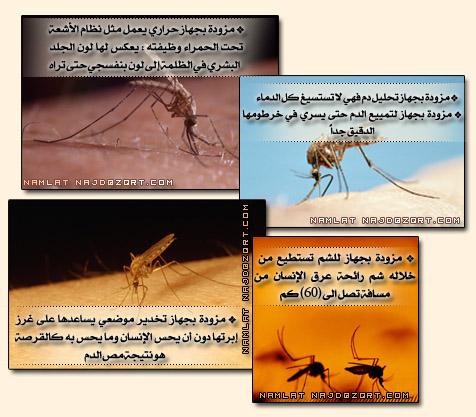 بالصور معجزة قرانية اثبتها العلم الحديث للأية 26 من سورة البقرة Namlah-b3o%279ah-3