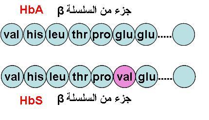 """تركيب البروتين """" درس بالشرح المفصل"""" HbSHbA"""