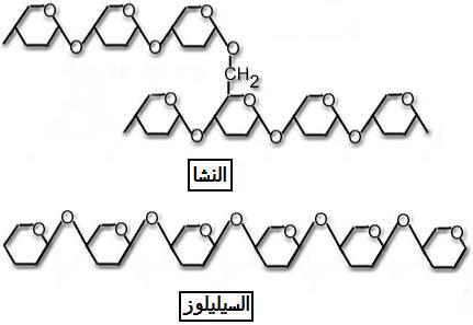 إنتاج المادة العضوية من طرف النباتات OSEphotos18