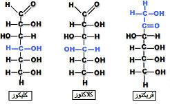 إنتاج المادة العضوية من طرف النباتات OSEphotos3