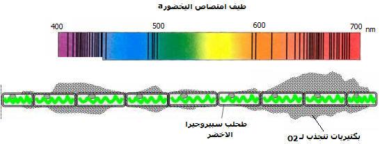 إنتاج المادة العضوية من طرف النباتات Experengelm