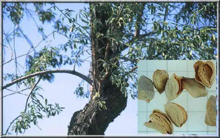 ملف الآعشاب ( كامل ) - صفحة 4 Lalobtree