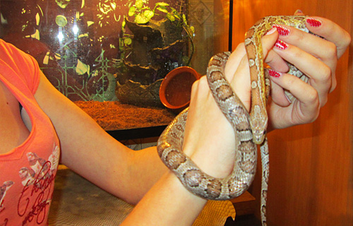 Магия змей. Змеи в магии.  Snakeyear03