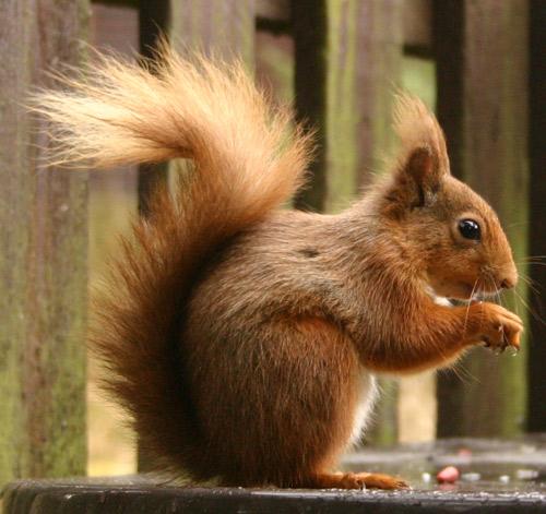 عالم السناجب Small-squirrel