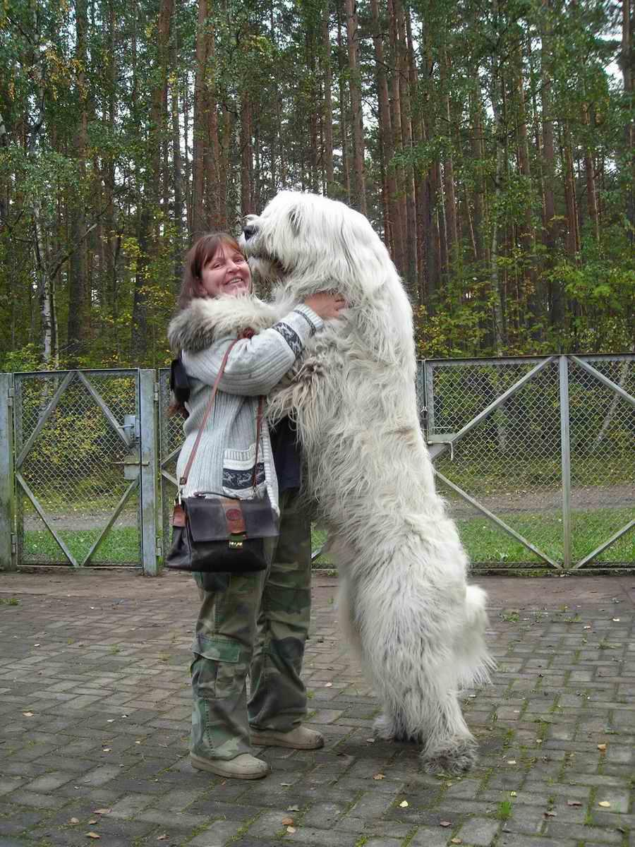 Que clase de perros te gustan a tí? - Página 2 Alex%20Snow%20Rose