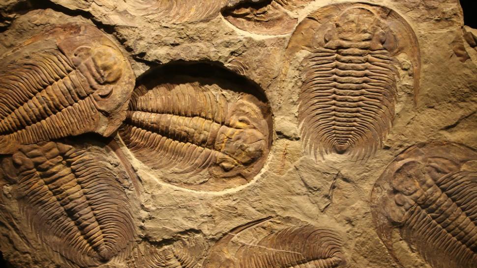 Fosili - Page 4 Fossils-970x546