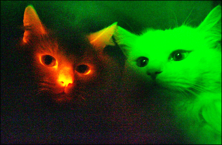 Upoznajte mačku koja svijetli u mraku! 071212_p01_red