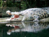 Krokodili Kroko