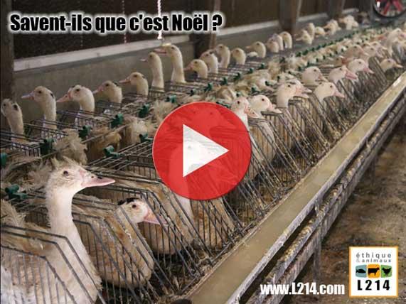 Explication sur le foie gras Noel-animaux-571