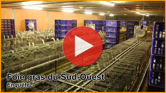 Explication sur le foie gras Foie-gras-sud-Ouest-571