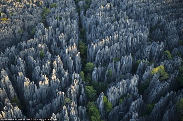 Tsingy, la forêt de pierres Labananequiparle-For%C3%AAt-de-pierres-Madagascar