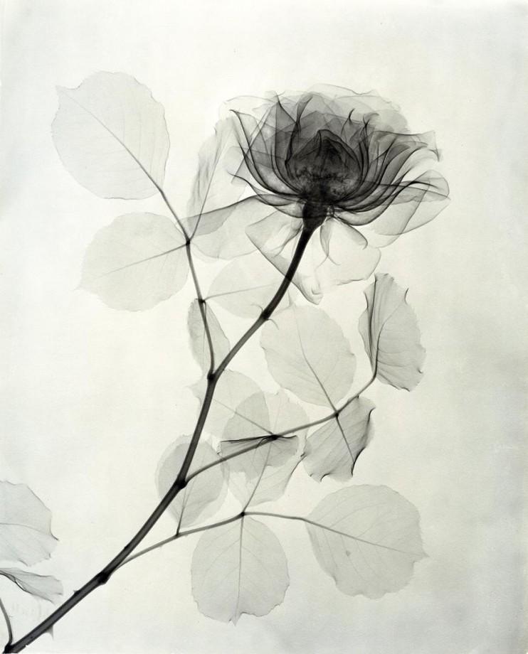 ????????? - Page 11 Xray-fleur-06-742x920