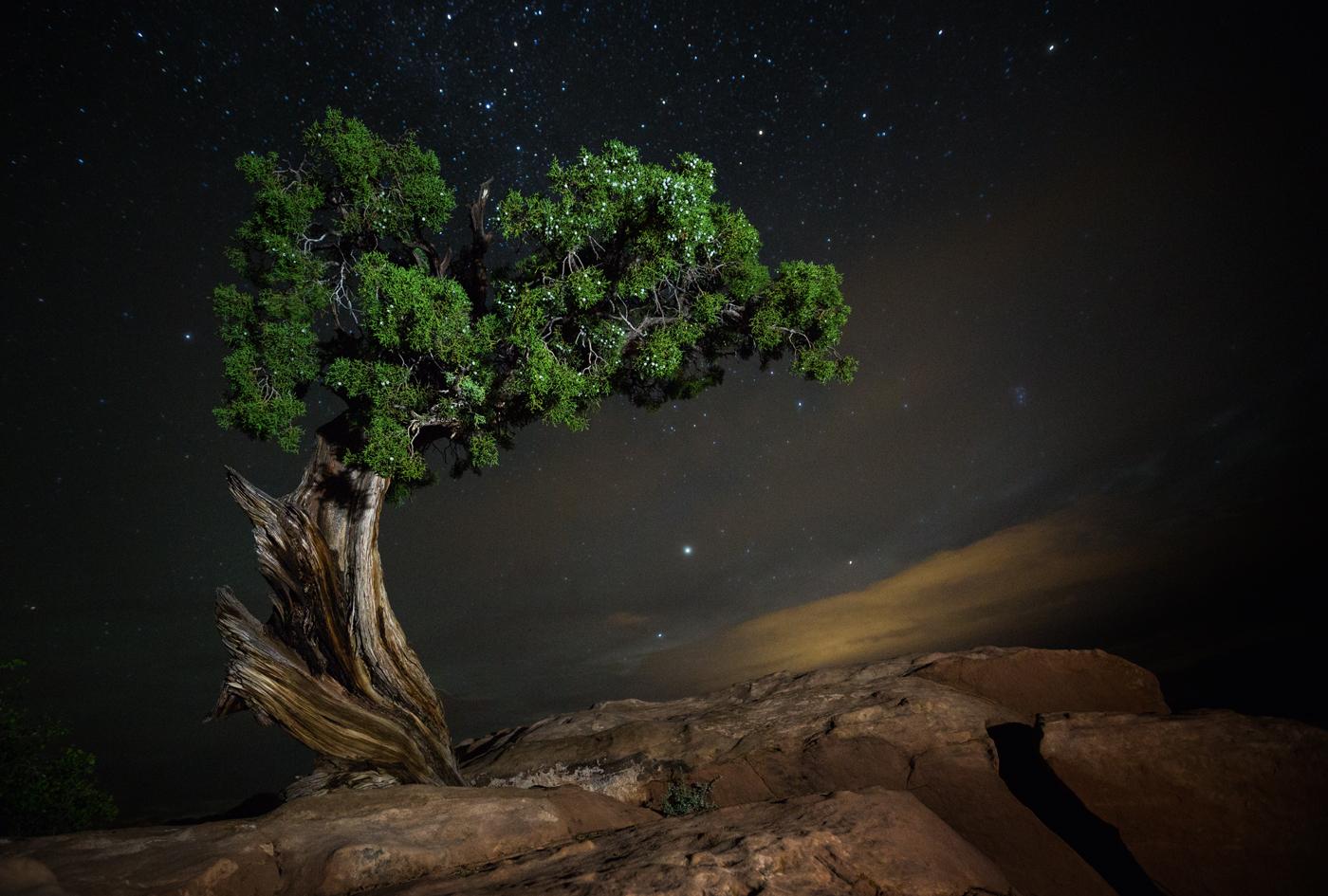 Les plus vieux arbres de la planète  Beth-Moon-vieu-arbre-etoile-01