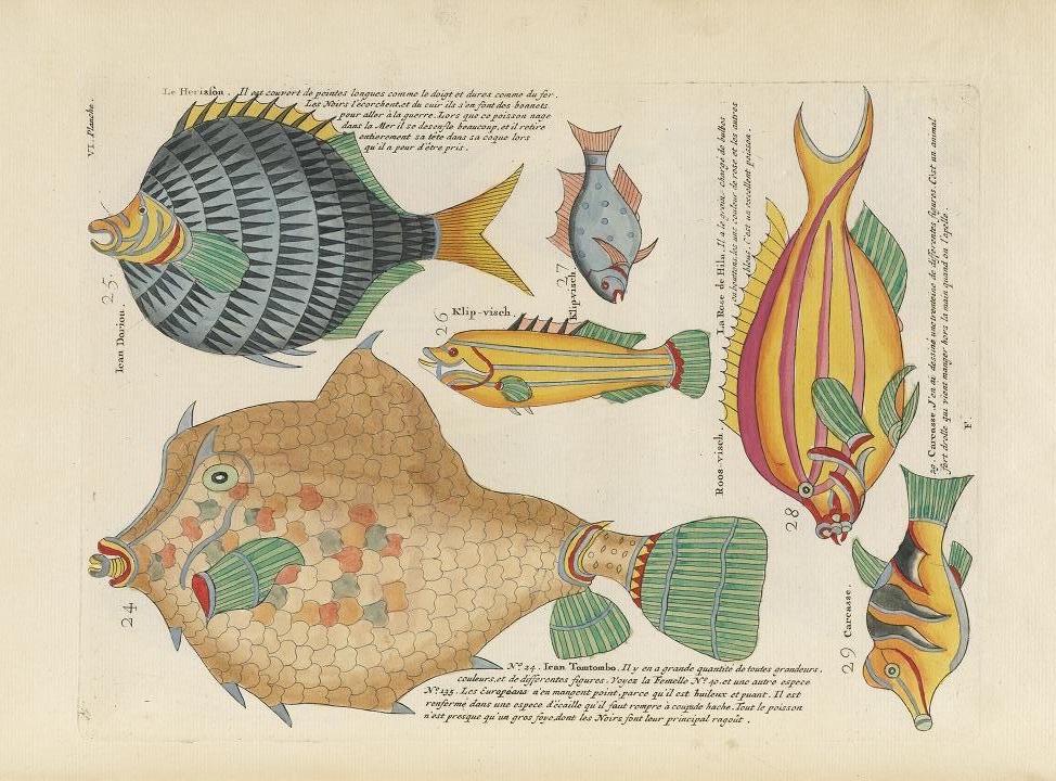 Des poissons tropicaux découverts en 1719 Poissons-tropicaux-01