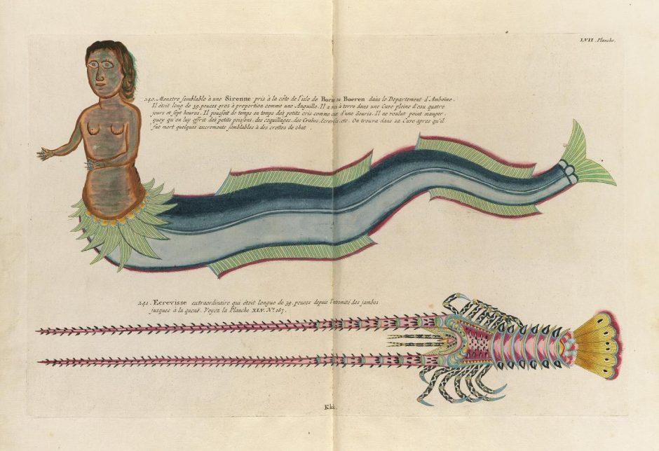 Des poissons tropicaux découverts en 1719 Poissons-tropicaux-02