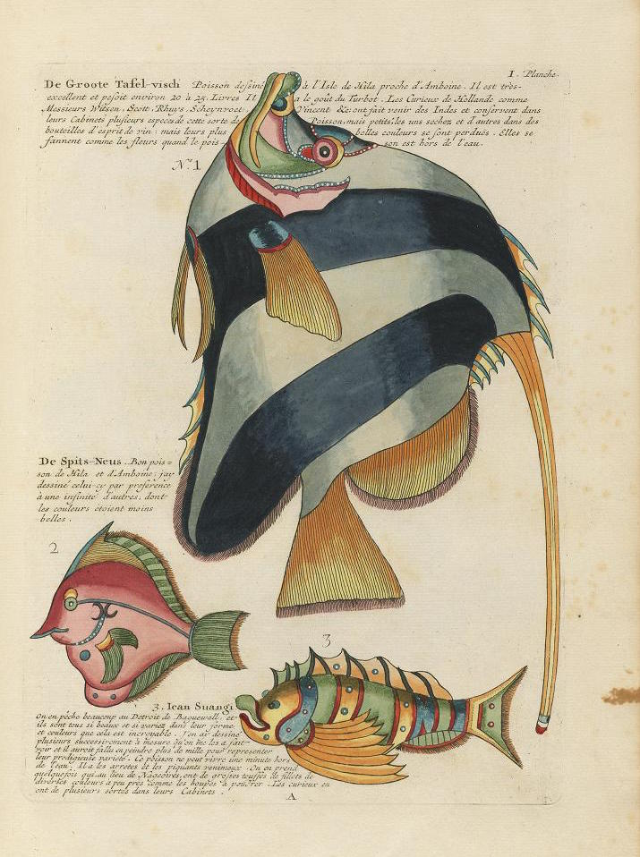Des poissons tropicaux découverts en 1719 Poissons-tropicaux-03