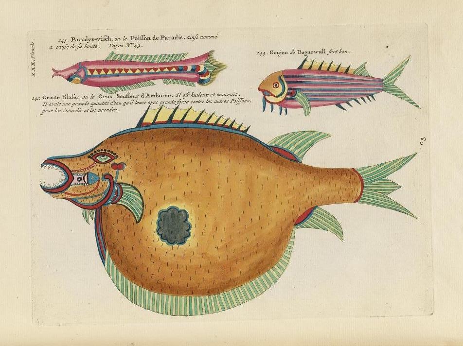Des poissons tropicaux découverts en 1719 Poissons-tropicaux-06