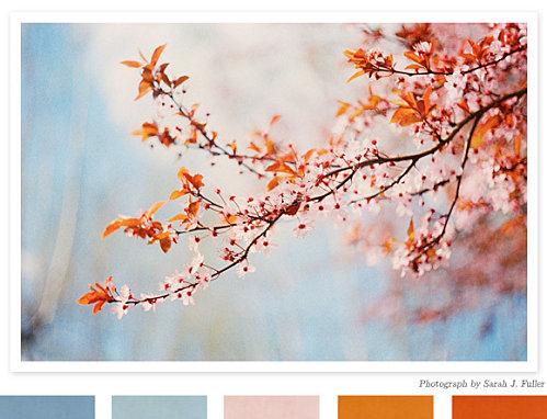 Conseil peinture piece a vivre  - Page 2 Fiancee-du-Panda-Si-j-etais-une-palette-de-couleur