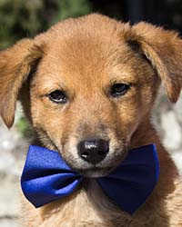 Ranch Dog Adoption Day this Saturday - 10 March Bentley