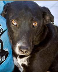 Ranch Dog Adoption Day this Saturday - 21 April Bobbysox