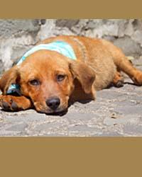 Ranch Dog Adoption Day this Saturday - 21 April Izzy