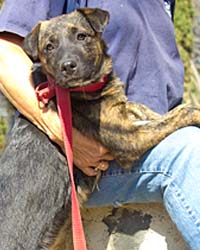 We're Back ! Ranch Puppy & Dog Adoption Day this Saturday - 9 June Jazzy