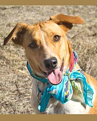 Ranch Dog Adoption Day this Saturday - 21 April Lia