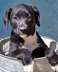 Ranch Dog Adoption Day this Saturday - 21 April Louisanna
