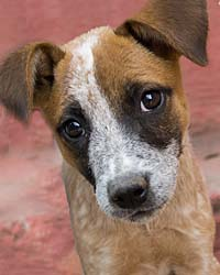 Ranch Puppy & Dog Adoption Day this Saturday - 21 July Pip