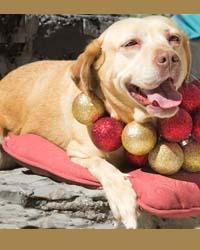 Ranch Dog Adoption Day this Saturday - 10 March Wanda