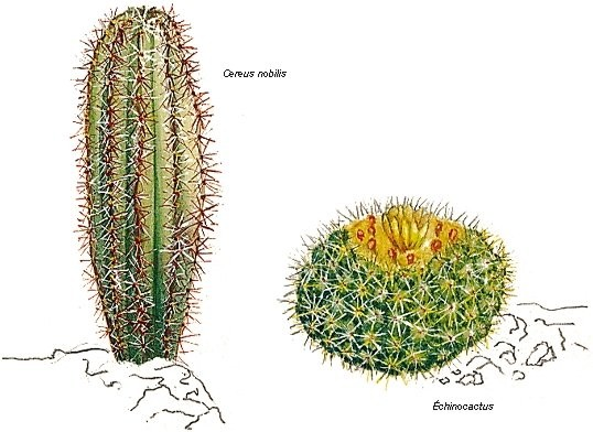25 orchidées, succulentes, plantes épineuses, grasses 1001003-Cactus
