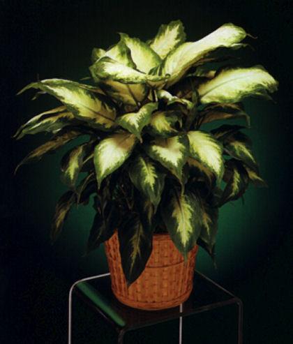 Sobne biljke Blooming3