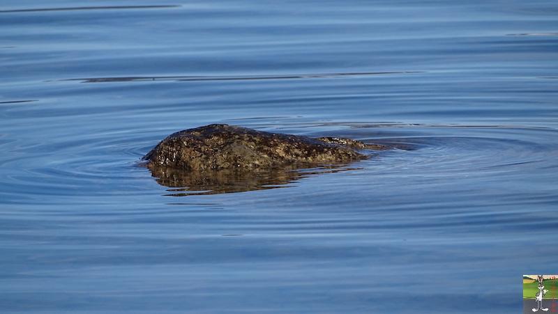 [VD-CH] : 2020-02-15 : Balade sur les bords du Lac de Joux 2020-02-15_lac_joux_29